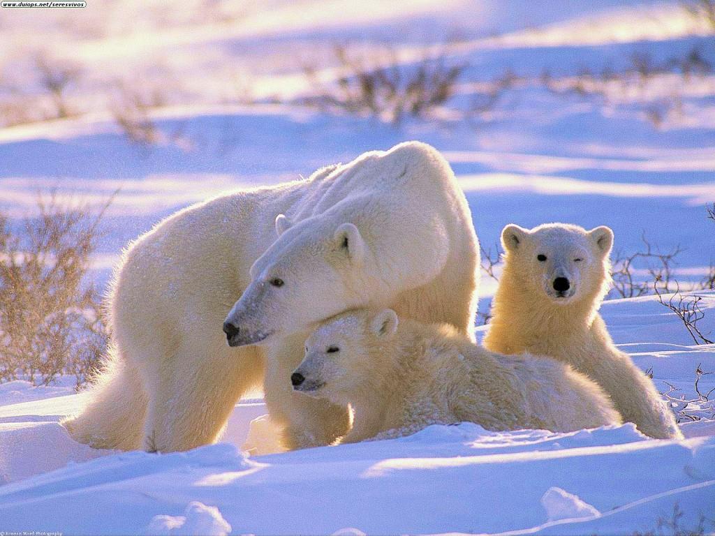 Favori L'ours blanc - Aventure Litteraire SS02