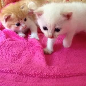 Loulou et Lulu