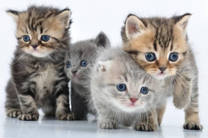 De l'utopie et des chatons: les mots