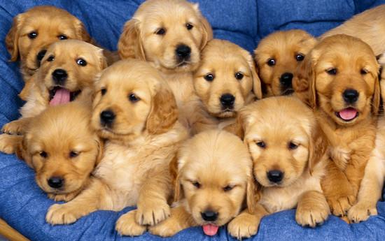 Dressage de chiens pour les comportements souhaités